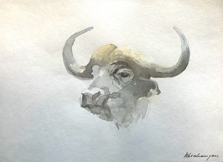 Buffalo, Bison Watercolor Handmade painting, signed